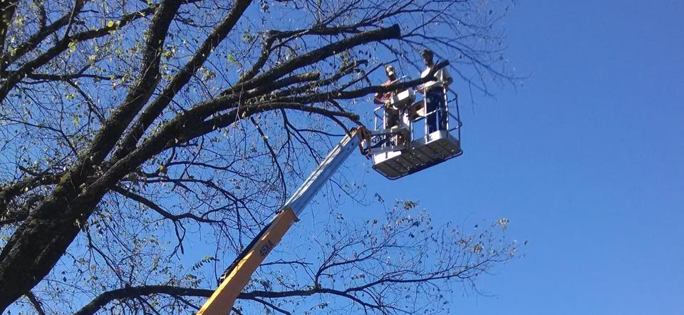 If you have trees endangering structures, Please call us!